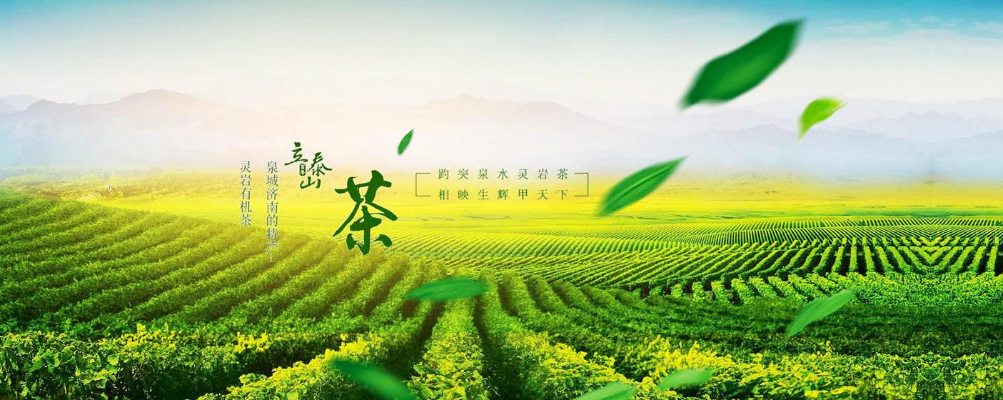 立泰山茶业